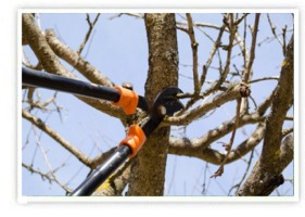 Winter Tree and Plant Pruning Service | Southbury, CT